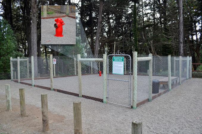 dog friendly rv campground in bodega bay